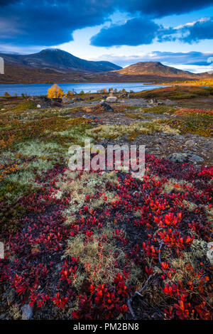 Autumn colors at Dovre, Norway. The red colored plant in the foreground is Dryas octopetala. In the background is the lake Avsjøen. - Stock Image