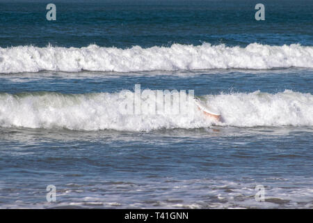 Surfboard wipe out - Stock Image