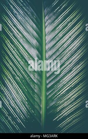 Close-up Green Leaf Background. - Stock Image
