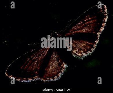 Moth on a Window - Stock Image