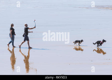 Dog walkers throwing a ball for their dogs on Fistral beach in Newquay in Cornwall. - Stock Image