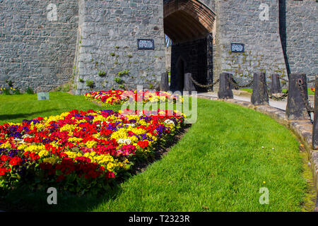 29 March 2019 Colourful formal mixed herbaceous bordesr of Polyanthus plants outside Killyleagh Castle in Killyleagh Village in County Down Northern I - Stock Image