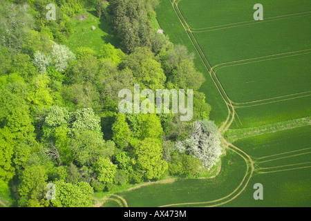 Aerial view of woodlands consisting of Deciduous and Coniferous Trees at the edge of a field - Stock Image