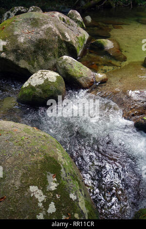 Boulders in perfectly clear rainforest creek on the slopes of Bartle Frere, far north Queensland, Australia. - Stock Image