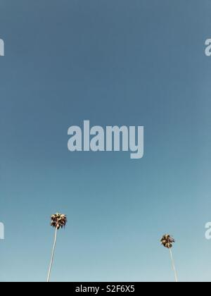 Two palm trees and open blue sky.  Manhattan Beach, California USA. - Stock Image