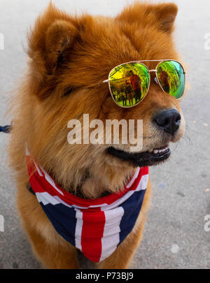 London, England. 4th July 2018. A small dog wears the Union Jack in support of England's success in the World Cup. He wore shades due to the current heatwave in London. ©Tim Ring/Alamy Live News - Stock Image