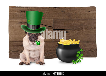 sweet pug puppy dog with st. patrick's day hat and pipe sitting next to pot with gold and shamrock, on wooden - Stock Image