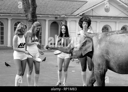 Strange tales of London. Beauty Queens (who will be in the pancake race on Tuesday) and baby elephant Minoti - she is five, but for an elephant that is a baby. February 1975 75-00776-010 - Stock Image