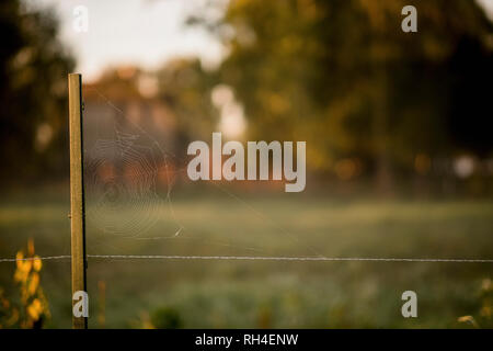 Spider web on rural fence - Stock Image