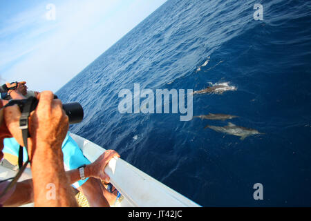 Dolphin watchers watching Spinner Dolphins that approached the boat - Stock Image