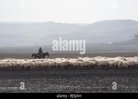 Schafherde mit Schäfer in der Steppe von Georgien. Roadtrip durch Georgien im Oktober 2016. - Stock Image
