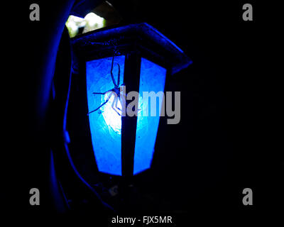 Close-Up Of Spider On Illuminated Lamp At Night - Stock Image