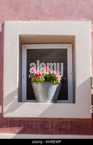 Flowers Vase Oia Santorini Greek Islands - Stock Image