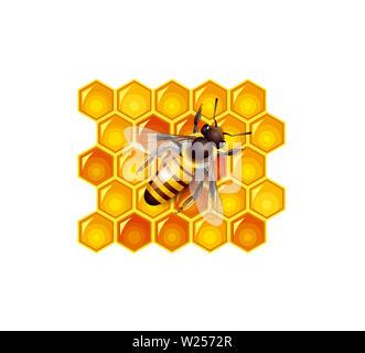 beehive honeycomb bee food   honey  natural yellow illustration - Stock Image