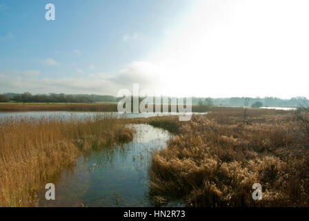 Staveley Nature Reserve, North Yorkshire; maintained by the Yorkshire Wildlife Trust.  Wetland habitat. - Stock Image
