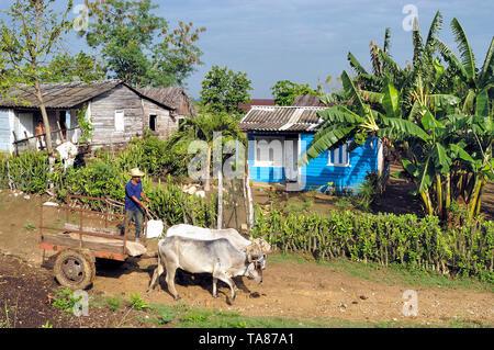 Pinar del Rio, Cuba-April 14, 2018: Cart pulled up by oxen in the rural area near Pinar del Rio at Cuba - Stock Image