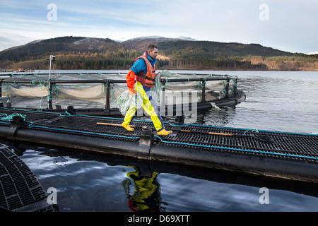 Worker on salmon farm in rural lake - Stock Image
