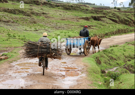 Malagasy Man and Ox Cart and Man with Firewood on a Bicycle, Subsistence Farming, Near Lake Tritriva, Madagascar, - Stock Image