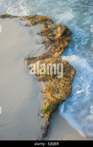 Beach Shore Detail - Stock Image