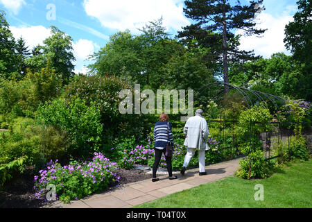People walking through the formal gardens at Hylands House and Gardens, Chelmsford, Essex, UK - Stock Image