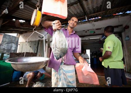 UNAWATUNA FISH MARKET; FISHERMEN WEIGHING THEIR DAILY CATCH - Stock Image