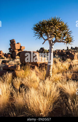Giant's Playground, showing dolerite boulders and a Quiver Tree, Aloe dichotoma, Keetmannshoop, Namibia, Southern - Stock Image
