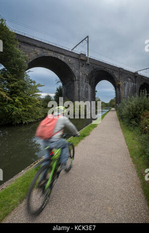 Cyclist on canal towpath with rail viaduct - Stock Image