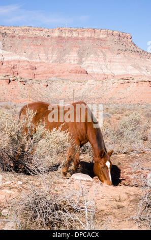 Vertical Composition Scenic Desert Southwest Landscape Animal Livestock Horse Grazing. Look closely you will see straw on this - Stock Image