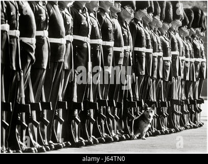 Farewell parade for Rats the Corgi-terrier mascot of the !st Battalion Welsh Guards, at Pirbright Barracks in 1980. - Stock Image