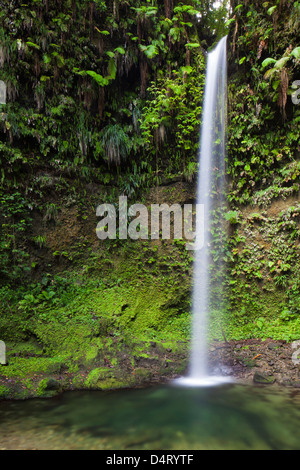 The first of the twin Spanny Falls, Dominica - Stock Image