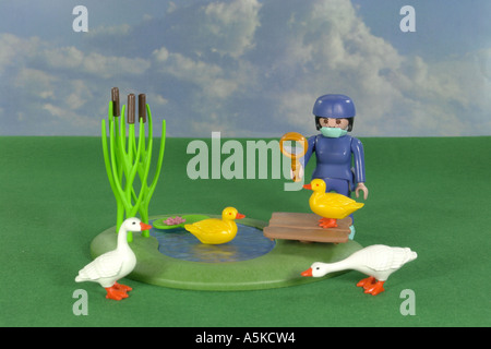 Investigation of ducks - Stock Image