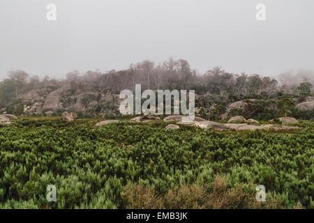 Mount Buffalo National Park, Victorian high country, Victoria, Australia - Stock Image