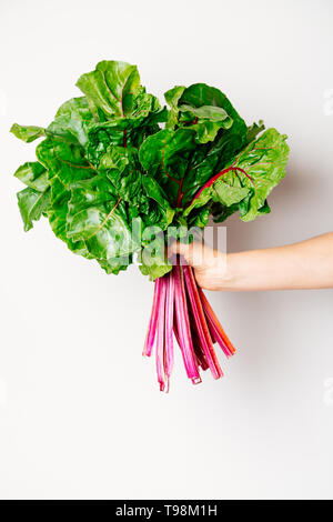 Hand of a woman holding a fresh bunch of swiss chard against a white background - Stock Image