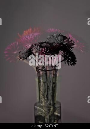 Dried flowers in vase, double exposure - Stock Image