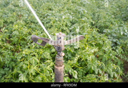 Full circle impact sprinkler at work over green field. Guadiana Meadows, Extremadura, Spain - Stock Image