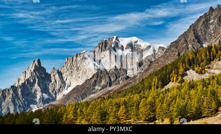 Mont Blanc illuminated by the morning sun with larch forest in the foreground and blue sky with some clouds in the background - Stock Image