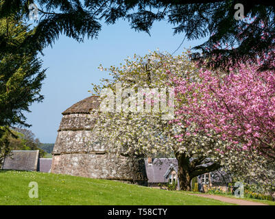 Old dovecote with cherry trees in grounds of Medieval Dirleton Castle fortress, East Lothian, Scotland, UK - Stock Image