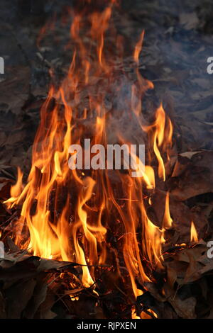 Fall leaves on fire - Stock Image
