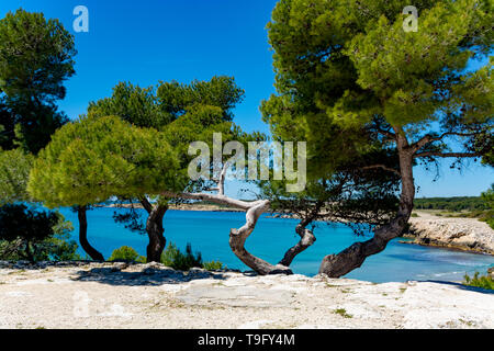 Crystal clear blue Mediterranean sea water on St.Croix Martigues beach and green mediterranean pine trees, Provence, France - Stock Image