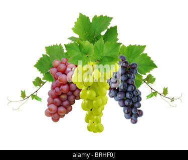 Three decorative fresh grape clusters - Stock Image