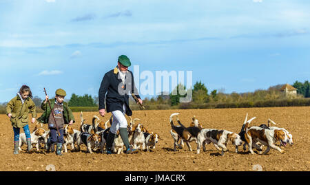 The East Lincs (Lincolnshire) Basset Hounds - The Huntsman, with young helpers and the pack of hounds away for the day hunting crossing a ploughed field - Stock Image