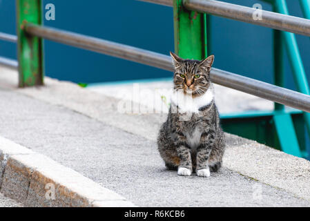 Cat sitting on the road at city street - Stock Image