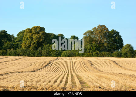 Arable farmland with woodland, Nottinghamshire, England, UK. - Stock Image