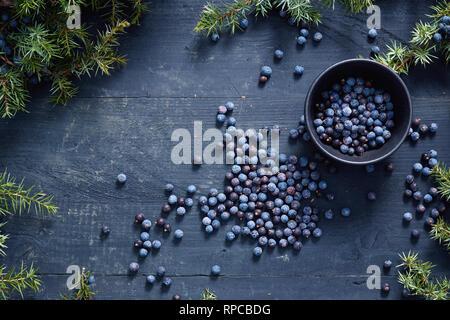 Juniper berries on and beside black bowl. Fresh juniper berries and branches. - Stock Image