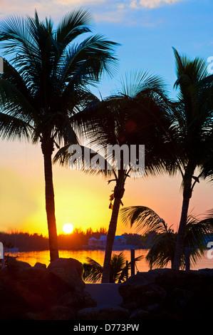 Swimming Pool Palm Trees Beach - Stock Image