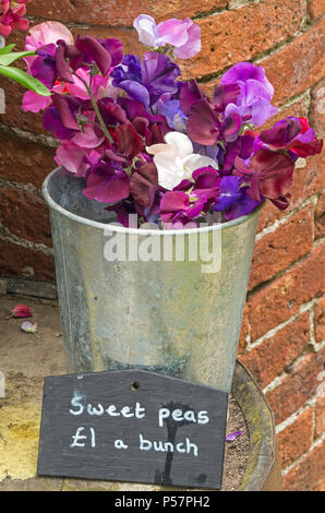 Small metal bucket with bunches of sweet pea flowers for sale - Stock Image