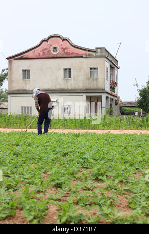 A woman tends to her crops. Kinmen County, Taiwan - Stock Image