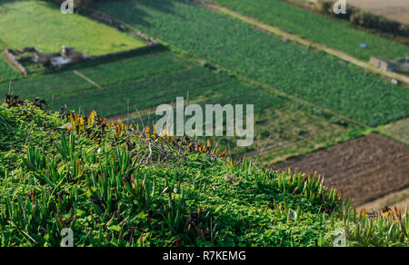 Bokeh scene of vegetation on hill with copy space and rows of crop field in background - Stock Image
