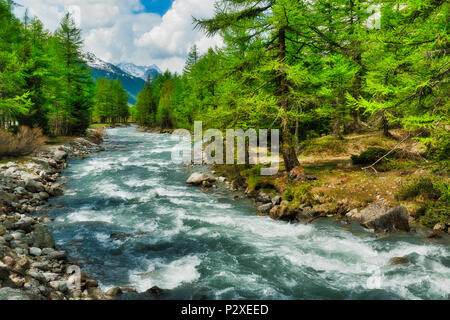 river among the trees in the mountains of the Valle d'Aosta during the melting snow in spring, Italy - Stock Image