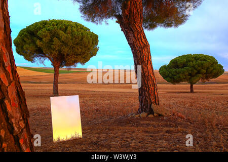 Reflection on a mirror in a cereal crop field in the Villafafila natural park. zamora. Spain. - Stock Image